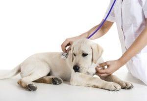 assurance animaux chien